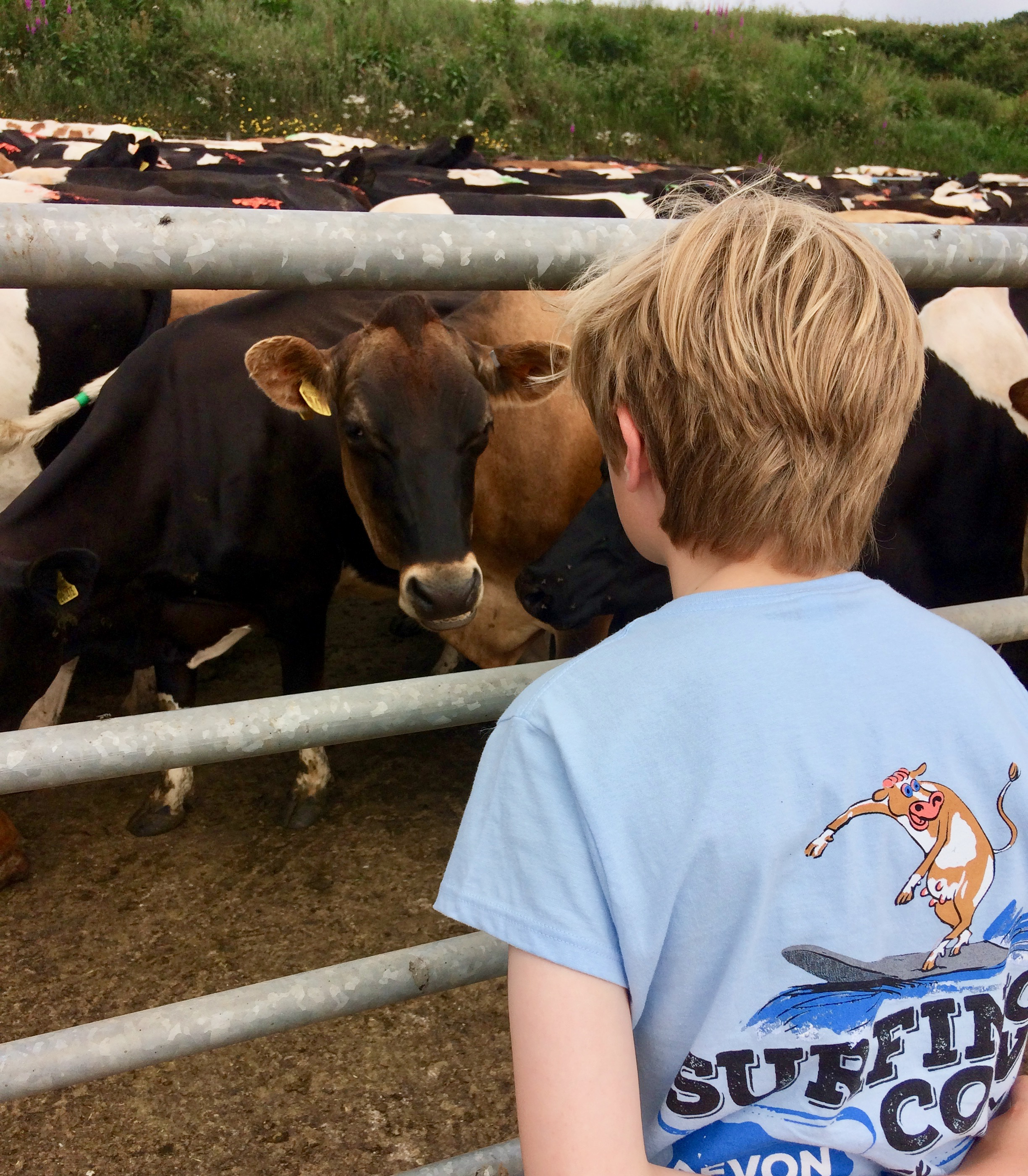 Surfing Cow ice cream scoops in on education